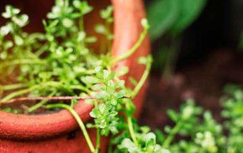 Growshop für Einsteiger